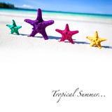 Морские звёзды цвета на песчаном пляже Стоковая Фотография