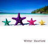 Морские звёзды цвета на песчаном пляже Стоковое фото RF