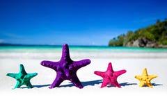 Морские звёзды цвета на песчаном пляже Стоковые Изображения RF