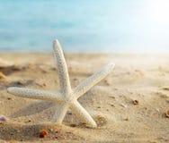 Морские звёзды Стоковые Изображения RF