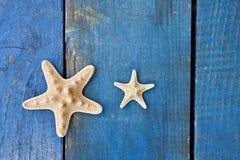 Морские звёзды Стоковые Изображения