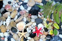 Морские звёзды, seashell, и красочные камни камешка Стоковые Фото