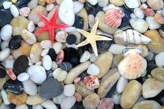 Морские звёзды, seashell, и красочные камни камешка Стоковые Фотографии RF