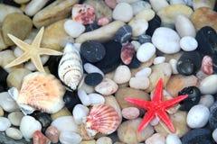 Морские звёзды, seashell, и красочные камни камешка Стоковая Фотография