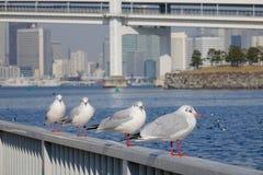 Морские птицы на парке в токио, Японии Стоковые Фотографии RF