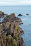 Морские птицы на утесах Slains рокируют, Aberdeenshire, Шотландия Стоковые Фото