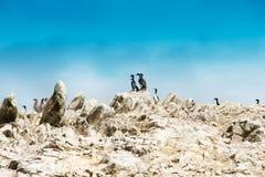 Морские птицы на rockface в острове Ballestas, природном парке стоковая фотография
