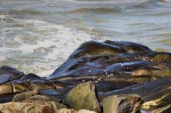 Морские птицы подавая на утесах Стоковые Изображения RF