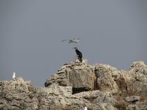 Морские птицы Стоковые Изображения RF