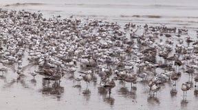 Морские птицы стоковые фото