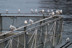 Морские птицы Стоковое Фото