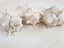 Морские раковины на песке стоковая фотография