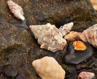 Морские раковины на утесах стоковая фотография