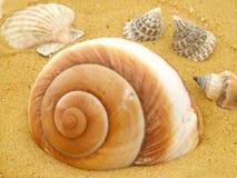 морские раковины Стоковые Изображения RF