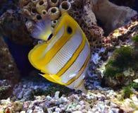 Морские рыбы Стоковые Изображения RF