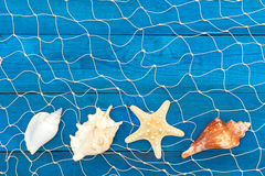 Морские сеть и раковины на голубых досках Стоковые Фото