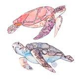 Морские черепахи Вектор океана Стоковое Изображение RF