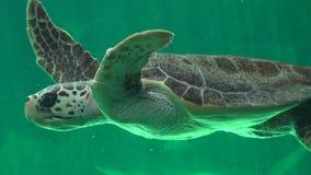 Морские черепахи и гады Стоковые Изображения