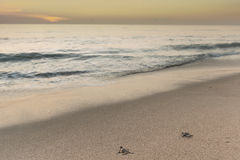 Морские черепахи на восходе солнца Стоковое фото RF
