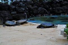 Морские черепахи Стоковая Фотография RF