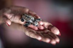 Морские черепахи Стоковые Фотографии RF