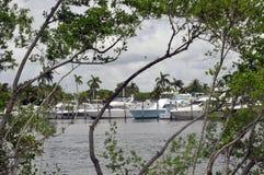 Морские шлюпки обрамленные деревьями Стоковое Фото