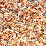 морское дно предпосылки красивейшее стоковые изображения rf
