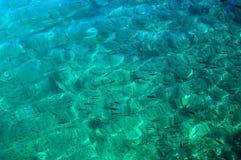 морское дно Стоковые Изображения RF