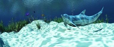 морское дно с дельфином стоковое фото