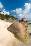 Морское побережье, валун, пальмы Стоковые Изображения