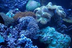 Морской аквариум Стоковая Фотография