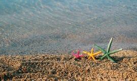 3 морской звезды Стоковое Изображение RF