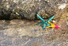 3 морской звезды Стоковое фото RF
