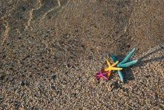 3 морской звезды Стоковые Фотографии RF