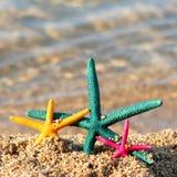 3 морской звезды Стоковая Фотография RF