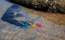 3 морской звезды Стоковые Фото
