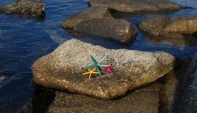 3 морской звезды Стоковые Изображения
