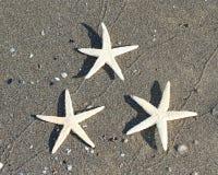 3 морской звёзды на тропическом пляже 1 моря Стоковое Фото