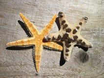 2 морской звёзды Стоковые Изображения RF