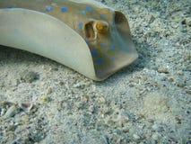 морской кек Стоковые Изображения