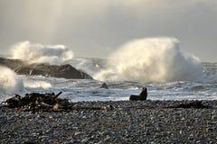 Морской котик на береге Стоковые Изображения RF