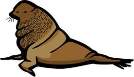 Морской котик Bull иллюстрация вектора