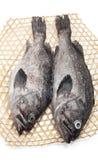 Морской окунь Стоковые Фото