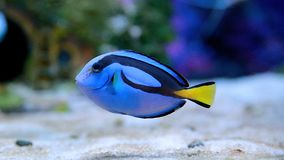 Морской организм [flysea-05] стоковая фотография