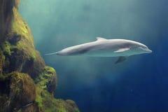 морской пехотинец жизни Стоковые Изображения RF