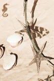 морской пехотинец жизни Стоковое Фото