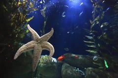 морской пехотинец жизни Стоковое Изображение RF