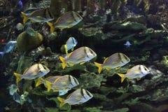 морской пехотинец жизни Стоковые Фотографии RF