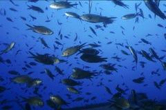 морской пехотинец жизни Стоковое Изображение