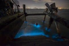 Морской планктон стоковое фото